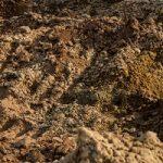 Dirt on Ground