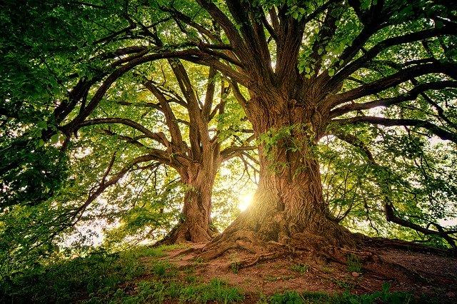 Foundation Repair Because of Tree